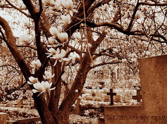 Spring Blooms 3