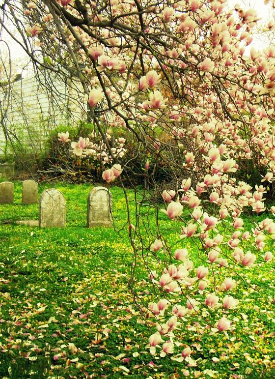 Spring Blooms 4