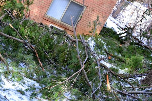 Arboreal Devastation