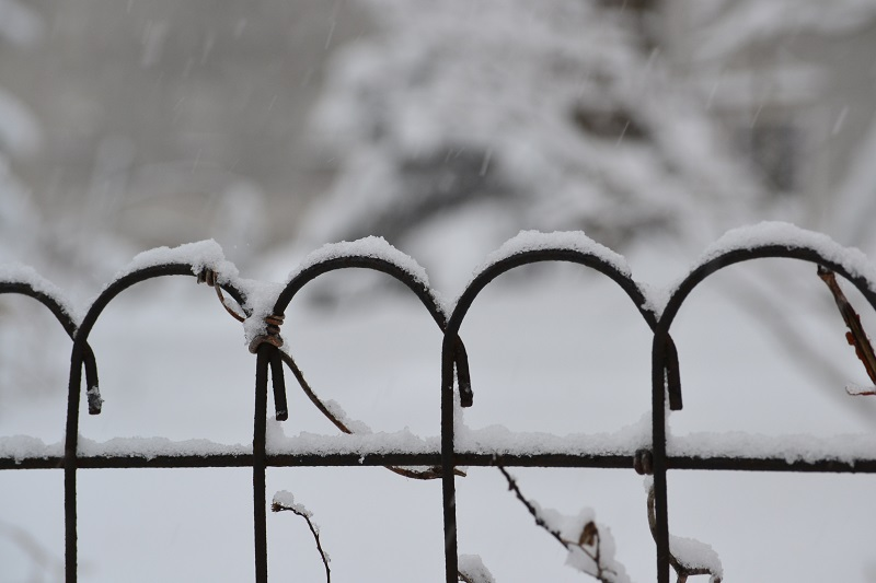 Oh, rickety, rusty wire-rimmed fence. You're so picturesque all covered in snow. Shhhhhh . . . I know, I know: you're inanimate and you'll never be able to understand these words.