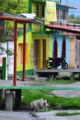 Street Dog and Colorful Buildings